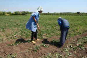 agricultori-1350636476